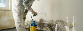 Éliminez vos problèmes de moisissure avec les services de nettoyage de moisissures