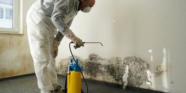 Services de nettoyage de moules